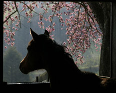 Horse with Virginia Dogwoods