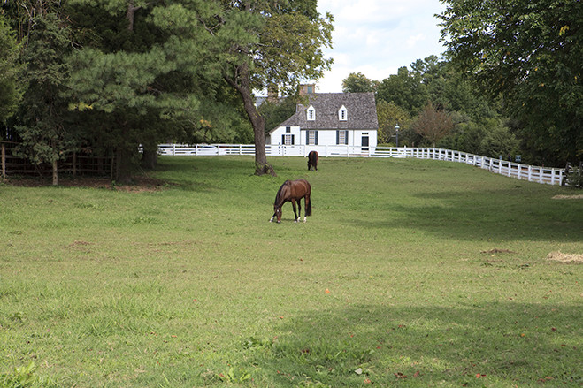 Charlottesville Equestrian Properties